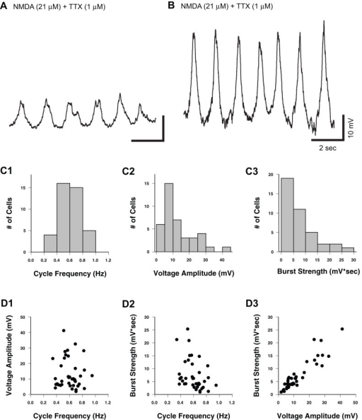 Distribution of cycle frequency and voltage amplitude for NMDA-induced membrane potential oscillations in Hb9 interneurons. A–B,Whole-cell current-clamp recordings of membrane potential from different Hb9 interneurons demonstrate variability of voltage amplitudes in NMDA induced oscillations. C1–3, Distribution plots of cycle frequency, voltage amplitude and burst strength. D1–3, There is no correlation between voltage amplitude and cycle frequency (D1; r = −0.10, p = 0.55, n = 40). However, correlations are found between burst strength and cycle frequency (D2; r = −0.39, p = 0.01, n = 40) and burst strength and voltage amplitude (D3; r = 0.92, p<0.001, n = 40).