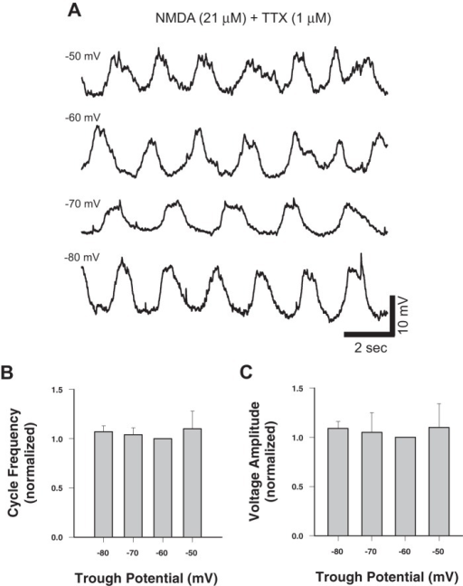 TTX-resistant NMDA-induced membrane potential oscillations in Hb9 interneurons show no voltage dependence. A,Whole-cell current-clamp recordings of membrane potential from a single Hb9 interneuron at various holding potentials. B, Plot of normalized cycle frequency (raw mean at −60 mV  = 0.46±0.06 Hz, range  = 0.4 to 0.5 Hz, n = 7) against holding potential. C, Plot of normalized voltage amplitude (raw mean at −60 mV  = 11.7±14.5 mV, range  = 4.1 to 14.5 mV, n = 7) against holding potential. Data are normalized to −60 mV.