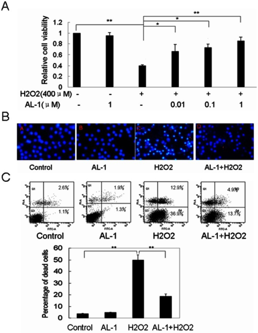 AL-1 attenuated H2O2-induced RIN-mβ cell death.(A) Effect of AL-1 on H2O2-induced cell viability. The RIN-mβ cells were pretreated with different concentrations (0.01, 0.1, 1 μM) of AL-1 prior to 400 μM H2O2 exposure for 4 h. The cell viability was measured by MTT assay. (B) Flow cytometric analysis for the AL-1 protection of RIN-mβ cells against H2O2-induced death. The RIN-mβ cells were treated with 0.1 μM AL-1, 400 μM H2O2, or 0.1 μM AL-1 for 1 h prior to 400 μM H2O2. The number of apoptotic cells was measured by flow cytometer.