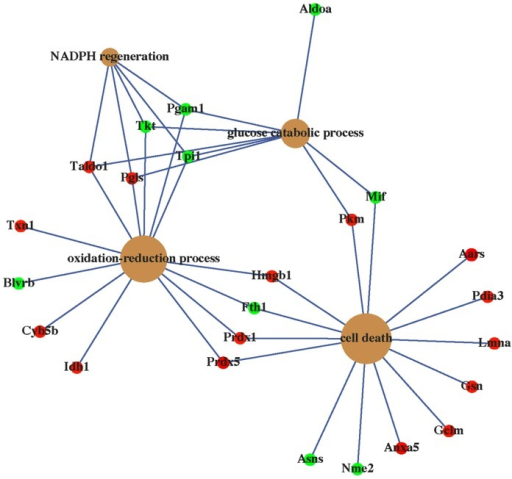Concept-gene networks of enriched biological processes of AL-1-regulated proteins that were analyzed by Bioconductor package clusterProfiler and visualized by GeneAnswers program.
