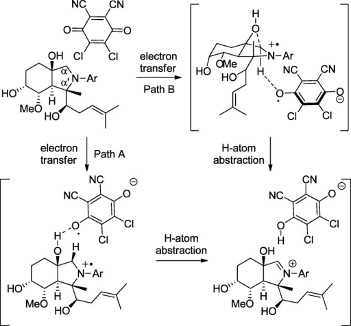 Possible Pathways for Oxygen-Directed Oxidation