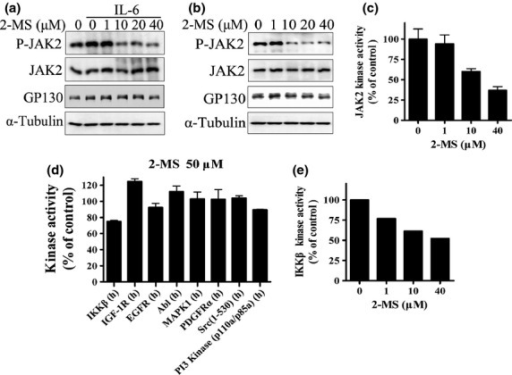 Effects of 2-methoxystypandrone (2-MS) on Janus kinase 2 (JAK2) and activities of other human kinases. (a) HeLa cells were incubated with indicated concentrations of 2-MS for 2 h before stimulation with interleukin-6 (IL-6) (30 ng/mL) for 15 min. Whole cell lysates were processed for western blot analysis and probed with anti-P-JAK2 (Y1007/1008), anti-JAK2 or anti-GP130 antibodies. Anti-α-Tubulin antibody was used as a loading control. (b) HeLa cells were incubated with indicated concentrations of 2-MS for 2 h before being processed for western blot analysis. (c) In vitro kinase assay of JAK2. JAK2 protein immunoprecipitated from HeLa cells was subjected to in vitro kinase assay in the presence of indicated concentrations of 2-MS. (d) Effects of 2-MS on activities of human kinases. In vitro kinase assays were processed by Millipore Kinase Services. (e) In vitro kinase assay of IKKβ. IKKβ protein immunoprecipitated from HEK293 cells was subjected to in vitro kinase assay in the presence of indicated concentrations of 2-MS.