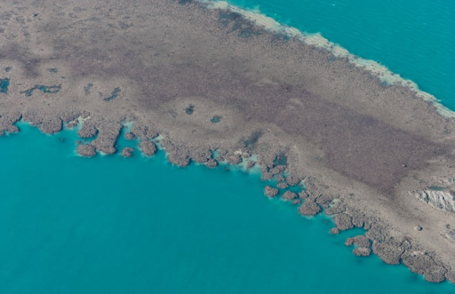 Coalescing nodular patch reefs exposed on a low spring tide at Cockatoo Island in the Buccaneer Archipelago, Western Australia (16°4.8′S 123°35′E).Photograph by John MacFadyen.