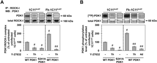 ROCK-I interacts with PDK1 and phosphorylates PDK1.(A) Immunoprecipitation of ROCK-I and immunoblotting of PDK1 in uninfected 1C115-HT or Fk-1C115-HT treated or not with Y-27632 (100 μM, 1h) as well as in 1C115-HT transfected with S241A PDK1 mutant. (B) Cell 32P metabolic labeling followed by PDK1 immunoprecipitation and western blotting for PDK1 phosphorylation level in uninfected 1C115-HT or Fk-1C115-HT treated or not with Y-27632 (100 μM, 1h) as well as in 1C115-HT transfected with S241A PDK1 mutant. Values are the mean ± s.e.m. # P < 0.05 versus non treated uninfected cells. ## P < 0.05 versus non treated infected cells.
