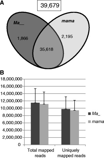 Summary of RNA-seq data analysis. a Venn diagram representation of the number of genes expressed (39,679) in genotype groups Ma_ (dark grey) and mama (light grey). The cutoff is group mean RPKM >0.3. b Mean number of total and uniquely mapped reads per sample in genotype groups Ma_ and mama. Standard deviations were shown with the error bars