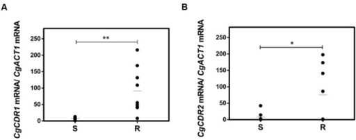 "Transcript levels of (A)CgCDR1 and (B)CgCDR2 in both susceptible (S) and resistant (R) C. glabrata clinical isolates. Transcript levels were assessed through quantitative RT-PCR, as described in the section ""Materials and Methods."" The obtained values are the average of at least three independent experiments. The average of the expression values in each group of clinical isolates is represented by a red line (). ∗p-value < 0.05, ∗∗p-value < 0.01."