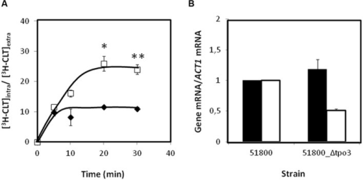 "(A) Time course accumulation ratio of [3H]-Clotrimazole in non-adapted cells of the parental strain 51800 () or the mutant strain 51800_Δcgtpo3 (), during cultivation in BM liquid medium in the presence of 30 mg/L unlabeled clotrimazole. (B) Transcript levels of CgCDR1 (in black) and CgCDR2 (in white) in the C. glabrata clinical isolate 51800, when compared to those determined in the 51800_Δcgtpo3 derived deletion mutant. Transcript levels were assessed through quantitative RT-PCR, as described in the section ""Materials and Methods."" The obtained values are the average of at least three independent experiments. Error bars represent the corresponding standard deviations. ∗p-value < 0.05, ∗∗p-value < 0.01."