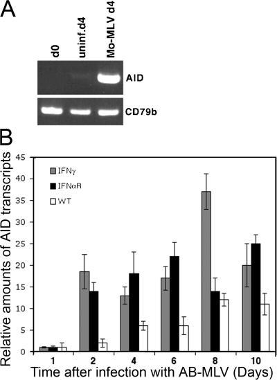 AID up-regulation does not require intact IFN signaling. (A) Mo-MLV infection of mouse bone marrow results in AID upregulation. CD79b expression is a loading control for the RT-PCR reaction. (B) IFN-γ and IFN-αR–deficient bone marrow cells induce AID expression upon viral infection.