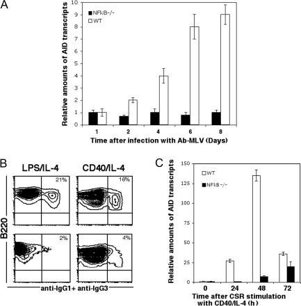 NF-κB is required for expression of virally induced AID. (A) Bone marrow cells from NF-κB (p50)−/− mice cannot induce AID expression upon infection with Ab-MLV. (B) NF-κB (p50)−/− splenic B cells are defective in CSR. Levels of CSR to IgG1 and IgG3 are shown 72 h after stimulation with LPS and IL-4 or CD40 and IL-4. (C) NF-κB is required for optimal AID expression in switching B cells.