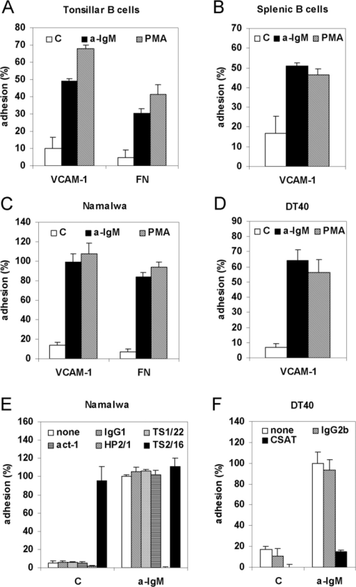 BCR activation induces integrin α4β1-mediated B cell adhesion to VCAM-1 and FN. (A) Primary tonsillar B cells were not stimulated (C) or stimulated with (Fab)2-fragments of anti-IgM (a-IgM) or PMA and plated for 20 min on a surface coated with either VCAM-1 or FN, as indicated. (B) Mouse splenic B cells were not stimulated (C) or stimulated with (Fab)2-fragments of anti-IgM (a-IgM), or PMA and plated on a surface coated with 0.3 μg/ml VCAM-1. (C) Namalwa cells were not stimulated (C) or stimulated with anti-IgM (a-IgM) or PMA and plated on a surface coated with either VCAM-1 or FN, as indicated. (D) DT40 cells were not stimulated (C) or stimulated with anti-IgM (a-IgM) or PMA and plated on a surface coated with VCAM-1. (E) Namalwa cells were preincubated for 1 h at 4°C with medium alone (none), 10 μg/ml of an IgG1 isotype control (IgG1), or antibody TS1/22 blocking LFA-1 (TS1/22), Act-1 blocking α4β7 (Act-1), HP2/1 blocking α4β1 (HP2/1), or antibody TS2/16 activating integrin α4β1 (TS2/16). Subsequently, cells were not stimulated (C) or stimulated with anti-IgM (a-IgM), as indicated, and plated on a surface coated with VCAM-1. (F) DT40 cells were preincubated for 1 h at 4°C with medium alone (none), or 10 μg/ml of an IgG2b isotype control (IgG2b) or antibody CSAT against integrin subunit β1 (CSAT). Subsequently, cells were stimulated with anti-IgM and plated on a surface coated with VCAM-1. (A-D) The adhesion is presented as absolute adhesion, with input being determined by adhesion of all cells to PLL (= 100% adhesion). (E and F) The adhesion was normalized to 100% for the anti-IgM-stimulated cells.