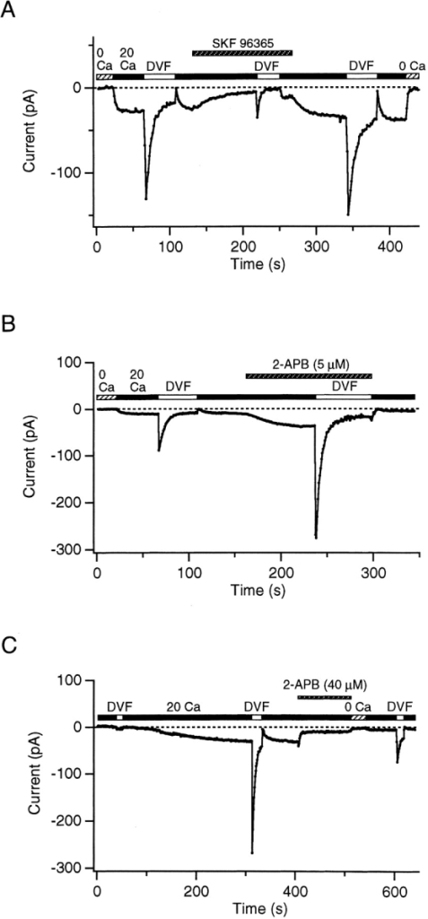 Pharmacological evidence for monovalent currents through CRAC channels. ICRAC was activated by treatment with 1 μM TG for 5 min before seal formation (in A and B) or by passive depletion with 10 mM intracellular BAPTA (in C), with 10 mM intracellular Mg2+ to inhibit IMIC. (A) SKF 96365 (20 μM) inhibits both ICRAC and the transient monovalent current (under DVF conditions). Both currents recover following washout of the drug. (B) A low concentration of 2-APB (5 μM) enhances both ICRAC and the transient monovalent current by severalfold. (C) A high concentration of 2-APB (40 μM) significantly reduces both ICRAC and the transient monovalent current. The inhibition of both currents persists after washout of the drug.