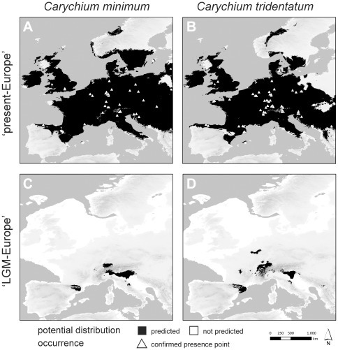 Potential distribution models of Carychium minimum and C. tridentatum.Shown are reconstructions for the bioclimatic conditions in present Europe (A, B) and during the European Last Glacial Maximum (LGM) approximately 21,000 years before present (C, D). Potential distribution is marked in black; triangles indicate the location of molecularly confirmed presence points obtained from this study.