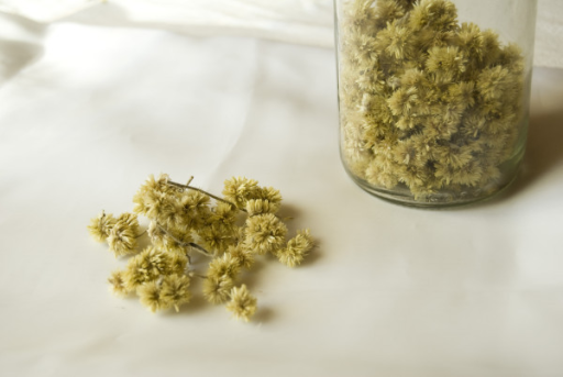 "Dried flowers of ""Macela"" (Achyrocline satureioides) collected by a Tyrolean informant (Photo: Elisabeth Kuhn)."