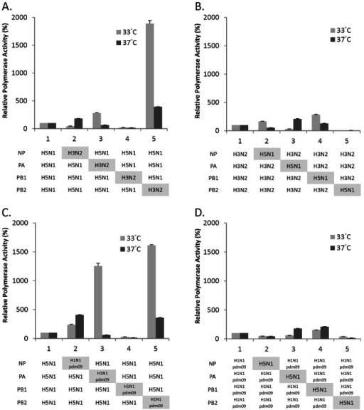 Comparison of in vitro polymerase activity of reconstituted RNP complexes.Activities of polymerase complexes with a single gene replacement following expression in human 293T cells. (A) H5N1 polymerase complexes substituted with one H3N2 gene, (B) H3N2 polymerase complexes substituted with one H5N1 gene, (C) H5N1 polymerase complexes substituted with one H1N1pdm09 gene, and (D) H1N1pdm09 polymerase complexes substituted with one H5N1 gene, were analyzed in 293T cells transfected with the indicated plasmids of NP, PA, PB1 and PB2 together with pPolI-vNP-Luc and a reporter plasmid pGL4.73. Cells were incubated at 33°C and 37°C. Polymerase activity was normalized with the expression of a reporter plasmid. Relative polymerase activity (%) was expressed as relative activity to the corresponding parental vRNPs. Results shown are means with standard deviations from three independent assays.