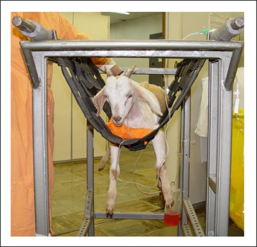 Customized stretcher for animals with kneel-shaped chest, in order to obtainthe parasternal echocardiographic views.