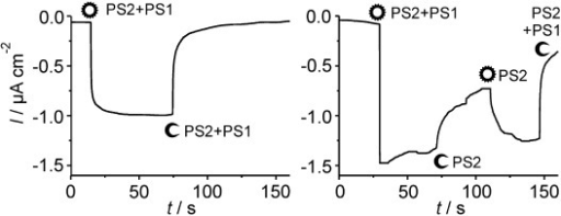 Photocurrent density of the proposed biophotovoltaic cell combining the PS2/Os1-based photoanode and the PS1/Os2-based photocathode as shown in Figure 2. The light status of the respective photoelectrode is indicated by O=light on and C=light off. Left: Simultaneous illumination of both half-cells with the same light intensity. Right: Starting with the same light intensity on both sides, light at the PS2 half-cell is switched off after 75 s and on again 30 s later. Finally, light was switched off at both half-cells. (Photoanode compartment: buffered electrolyte pH 6.5; photocathode compartment: buffered electrolyte pH 5.5 containing 2 mm methyl viologen.)
