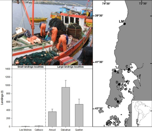 Left panel: Sampling localities at the southern of Chile; LM: Los Molinos, C: Calbuco, A: Ancud, D: Dalcahue, Q: Quellon.Right panel: Mean and standard error of Metacarcinus edwardsii landings over the last 5 years by locality, and picture showing a typical boat involved in the crab fishery and fishermen working during a landing.