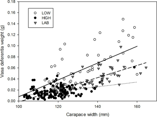 Relationship between carapace width and vasa deferentia weight of Metacarcinus edwardsii males during the mating season for individuals from contrasting fishery scenarios (low and high fishery intensity) and just-mated males from laboratory experiments.Data from localities with similar fishery intensity were pooled. Continuous line; linear fit from low fishery intensity. Dashed line; linear fit from laboratory experiment, dotted line; linear fit from high fishery intensity.