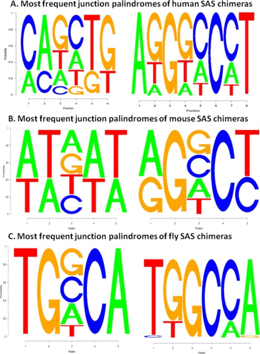 The most frequent junction motifs of SAS chimeras are incorporate palindromic sequences. (A) Two palindromic motifs found for human SAS chimeras. (B) Motifs of the mouse SAS chimeras. (C) Motifs of the fly SAS chimeras.
