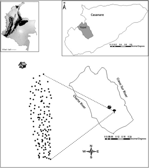 Geographic location of the study area in Colombia. The tree shows the location of the Corinto farm, Corregimiento Morichal in Yopal Casanare, and the points represent each of the individual palm trees sampled and their respective spatial distribution in the forest.