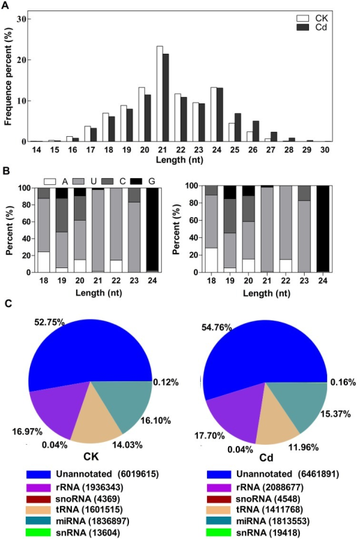 Length distribution (A), first nucleotide bias (B) and composition (C) of the small RNA in CK and Cd libraries.A, Average percentage (Y-axis) of redundant sequences of 14–30 nt length (X-axis) in CK and TR libraries. B, Base bias on the first position among small RNA with certain length. Each color in the figure shows the sRNA tags whose first base is a certain base. C, Summarization of all alignments. To make every unique small RNA mapped to only one annotation, we follow the following priority rule: rRNA etc (in which Genbank >Rfam) > known miRNA > repeat > exon > intron.