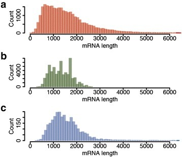 Transcript length distribution. a Length distribution of 29,831 transcript models supported by evidence previously annotated in the RefBeet-1.1 assembly [13]. b Length distribution of SMRT CCS representing full-length transcripts. c Length distribution of transcripts annotated in RefBeet-1.1 that were matched by CCS representing full-length transcripts