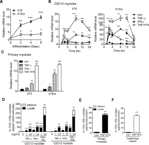"Skeletal muscle cells express IL-15/IL-15Rα protein complex in response to TNF-α and IFN-γ stimulation. a Expression of Il15 and Il15ra mRNA during C2C12 myoblast differentiation. Samples were collected before (0) and 2, 4, and 6 days after differentiation induction. b Expression of Il15 and Il15ra mRNA in C2C12 myotubes treated with TNF-α (10 ng/ml), IFN-γ (10 ng/ml), TNF-α + IFN-γ (TNF + IFN, 10 ng/ml each), or without cytokine (con) for 1, 2, 3, 6, 12, and 24 h. c Expression of Il15 and Il15ra mRNA in primary myotubes treated with TNF-α (5 ng/ml), IFN-γ (5 ng/ml), TNF + IFN (5 ng/ml each), or without cytokine (con) for 24 h. d Expression of IL-15/IL-15Rα complex protein in C2C12 myoblasts and myotubes treated with TNF-α (1 or 10 ng/ml), IFN-γ (1 or 10 ng/ml), TNF + IFN (1 or 10 ng/ml each), or without cytokine (con) for 24 h. e Expression of IL-15/IL-15Rα complex protein in primary myotubes treated with TNF + IFN (5 ng/ml each) or vehicle (con) for 24 h. f Expression of IL-15/IL-15Rα complex protein in skeletal muscle in vivo. TNF-α plus IFN-γ (1 mg each/injection) or PBS (con) was injected into the quadriceps muscles of mice three times at 4-h intervals. The injected muscles were collected 16 h after the last injection. Total RNA was isolated and analyzed by qPCR (a–c). Protein lysate and cell culture medium were collected and measured by ELISA (d–f). Data in (a–c) were triplicates and representative of two independent experiments with similar result. Data in (d, e) were pooled from three independent experiments. Data in (f) was pooled from three mice in each group. Data are mean ± SEM. *p < 0.05, **p < 0.01, ***p < 0.001, in comparison to ""0"" or ""con"""