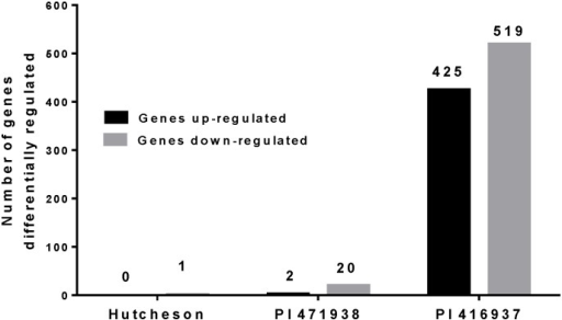 Number of genes differentially expressed in leaves of Hutcheson, PI 471938 and PI 416937 exposed to high VPD.Black bars represent number of genes up-regulated in each genotype, and grey bars correspond to number of down-regulated genes.