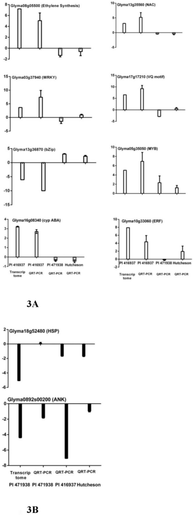 Validation of transcriptome data with QRT-PCR.Genes for the validation were selected from significantly expressed categories of PI 416937 (A) and PI 471938 (B). The X-axis represents soybean genotype, and the Y-axis is log2 fold change of transcript levels at high VPD in comparison to low VPD (q<0.05). The first bars in 3A and 3B represent gene expression data from the transcriptome study in PI 416937 and PI 471938, and remaining bars indicate data from QRT-PCR study. Error bars represent the standard deviation.