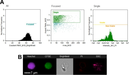 Initial gating strategy to analyze Blastocystis cells.Cells were gated for focused cells using brightfield channel, then selection of single cells using aspect ratio and area units, and finally to classify viable and non-viable cells using PI-staining characteristics. The above graphs shows the analysis for Blastocystis ST1-NUH9 isolate (A). Subsequent analyses made use of features arising from Hoechst and CFSE staining characteristics as well as features from brightfield and side-scatter channels (B).
