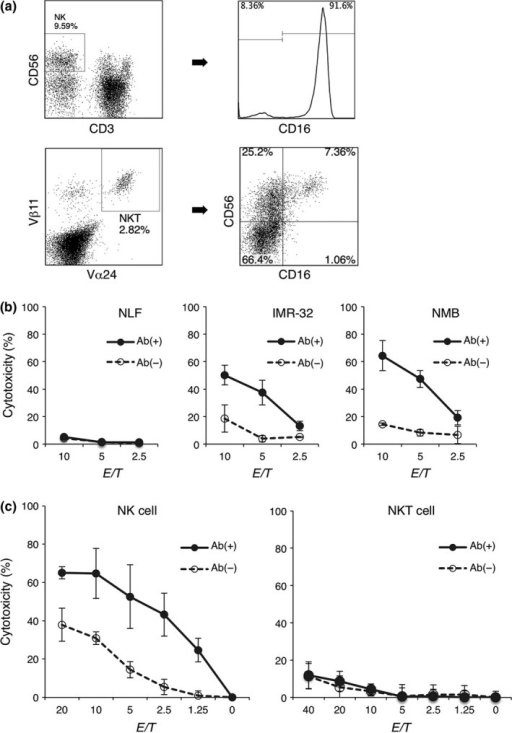 Natural killer (NK) cell‐mediated antibody‐dependent cellular cytotoxicity (ADCC) is related to the expression level of the tumor antigen, whereas invariant natural killer T (iNKT) cells themselves do not mediate ADCC. (a) The surface FcγR (CD16) expression of freshly isolated NK cells and expanded iNKT cells is shown. The data are from one representative experiment of a total of five experiments. (b) NK cells were cultured for 4 h at various E:T ratios with NB cell lines with various intensities of the GD2 expression in the presence of anti‐GD2 antibodies or isotype controls. (c) NK cells and iNKT cells were cultured for 4 h at various E:T ratios with NMB NB cells.