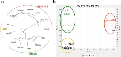 Genetic structure and population differentiation in 13 rice parental varieties. a Unweighted pair group method with arithmetic mean (UPGMA) dendrogram based on 22,682 SNPs. b Principal component analysis for the entire set of RILs (n = 306)