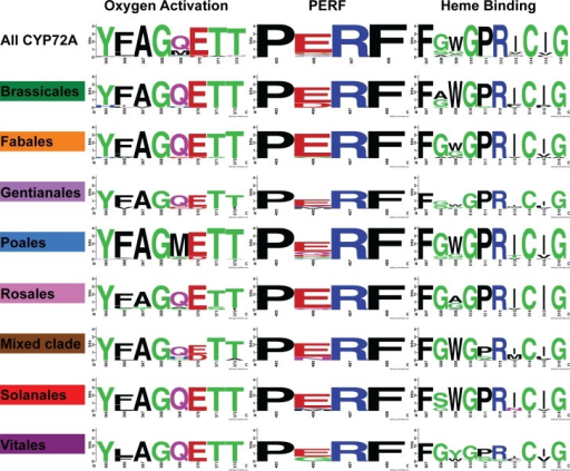 "Amino acid sequence logo representations of the CYP signature domains.The positions are numbered according to the residue number in the ""all CYP72A"" alignment used for generating Fig 2. The relative size of the amino acid letters in the logo diagram represents the frequency of that amino acid in the subset of sequences indicated on the left. Amino acid residue frequencies from individual clades (highlighted in Fig 2) were compared to the residue frequencies across the entire set of sequences. The amino acids are colored to indicate functional similarities: (green (polar), purple (neutral), blue (basic), red (acidic), black (hydrophobic). The diagrams were created using WebLogo2 [24]."