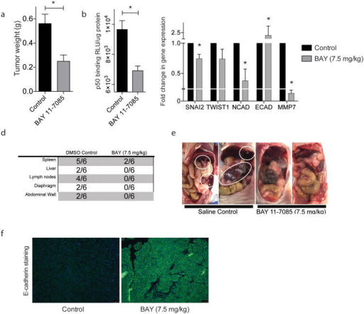 Inhibition of NF-κB inhibits EMT and metastasis in vivo: BAY 11-7085 treatment in a orthotopic MIA PaCa-2 model decreases (a) tumor weight; (b) tumor NF-κB activity; (c) tumor EMT gene expression; and (d) (e) metastasis to distant sites. Each bar is representative of three or more independent experiments; error bars are represented in SEM; and the asterisk (*) indicates a p value < 0.05.