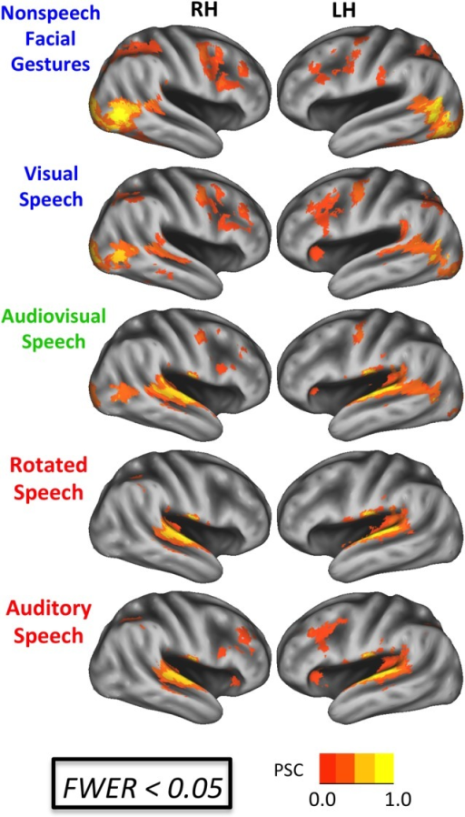 BOLD effects during each experimental condition. Results are shown on an inflated surface rendering of the study-specific template in MNI space. Top: speech conditions (A, V, AV). Bottom: nonspeech conditions (R, G). All maps thresholded at an uncorrected voxel-wise p < 0.005 with a cluster threshold of 185 voxels (family-wise error rate (FWER) corrected p < 0.05). PSC, percent signal change.