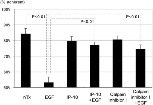 The effects of IP-10 and calpain inhibitor I on EGF-induced cell detachment. Cells were plated into the 24-well Amgel coated plates with quiescent media and incubated for 12 h. After pretreatment with or without IP-10 (50 ng/ml for 4 h) or calpain inhibitor I (1 ng/ml for 30 min), cells were treated with or without EGF (1 nM) for 30 min. Before and after the centrifugation, the numbers of the cells on the plates were counted under the phase-contrast microscope observation. The data are the mean ± SEM of three independent studies each performed in at least 18 wells. Statistical analyses were performed by Student's t test.