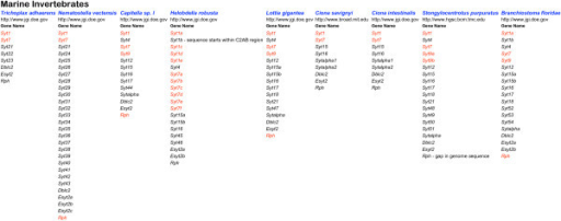 Summary of the genes collected from marine invertebrate genomes. The website of the organisation which sequenced the genome is listed below the organism name. Underneath the Gene Name heading, gene symbols are listed. Red symbols indicate sequences containing all ten acidic amino acid positions required for function as a calcium trigger for exocytosis.