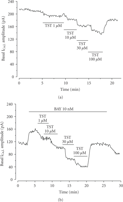 Effect of testosterone on ICa,L amplitude in A7r5 cells. Original records of ICa,L measured in Patch-clamp experiments showing that increasing concentrations of testosterone (TST; 10-100 μM) inhibit basal ICa,L (a) and BAY-stimulated ICa,L (b).