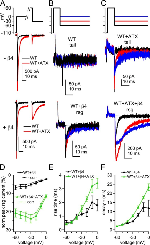 Tail currents and β4 peptide–induced resurgent Na currents in WT channels. (A) Voltage protocol and representative transient and tail and/or resurgent currents in WT channels without and with β4 peptide. Black, control; red, ATX. (B) Tail and resurgent currents in control solutions, as in A, expanded. (C) Tail and resurgent currents in ATX, as in A, expanded. (D) Mean peak resurgent current amplitude versus voltage in WT (black) and ATX-modified WT (green) channels. Currents normalized to peak transient current at 0 mV in each cell. Dashed lines, corrected for incomplete activation of transient current at 0 mV. (E) Mean time to peak resurgent current versus voltage. (F) Mean decay time constant (τ) of resurgent current, fit with a single exponential. Within-cell comparisons ±ATX; −β4, n = 6; +β4, n = 5.