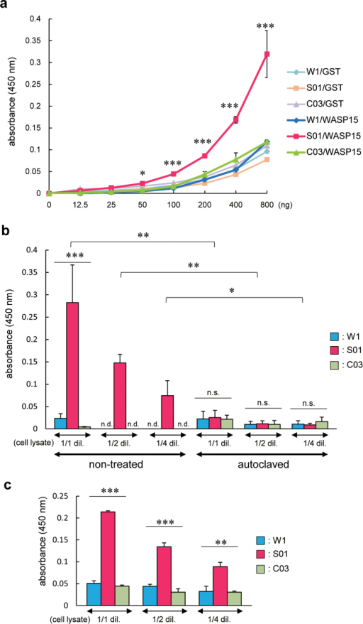ScFv-conjugated silk film efficiently detects the target protein.Specific binding was quantified by ELISA using 96-well plates coated with silk film derived from W1, S01, or C03 strains. (a) The indicated amount of GST or GST-WASP15 was added to each silk film-coated well. (b) A mouse macrophage RAW264.7 cell line was lysed. The lysate was diluted by half (1/2 dil.), one-quarter (1/4 dil.), or not diluted (1/1 dil.) and added to each silk film-coated well or control well coated with silk film made from silk solution after autoclaving. (c) The diluted or non-diluted cell lysate was added to each silk film-coated well which 3 months have passed since it was made. Values are mean ± standard error of the mean from three independent experiments. *P < 0.05; ** P < 0.01; ***P < 0.001; n.s., not significant; n.d., not detectable.