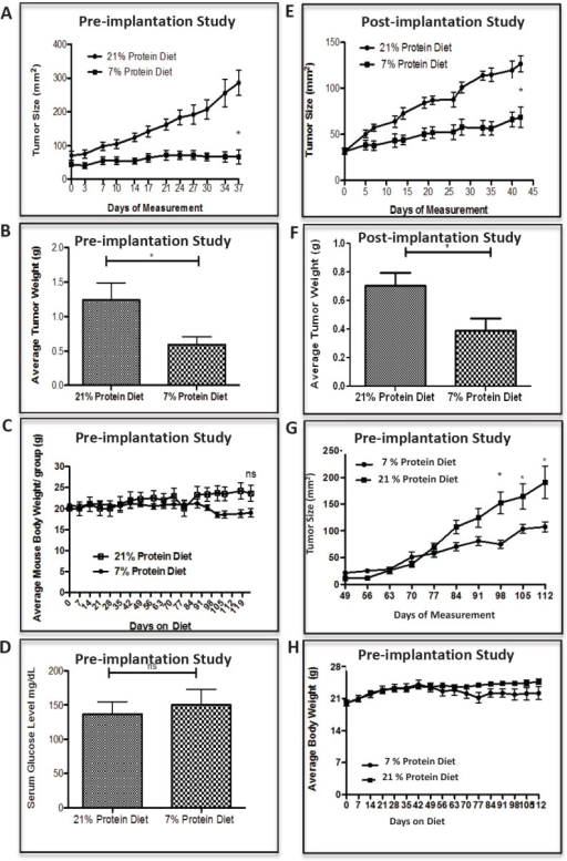 Low protein diet attenuates the growth of prostate and breast cancer in the castrate-resistant LuCaP23.1 model and in the WHIM16 model, respectivelyTumor sizes were assessed two times a week by caliper measurements. (A, B) LuCaP23.1-CR and (G) WHIM16 growth curve of tumors already exposed to low protein diet (pre-implantation studies) and endpoint tumor weights. (E, F) LuCap23.1-CR growth curve of tumors exposed to low protein diet after tumors were implanted and established (post-implantation studies), and endpoint tumor weights. (C) LuCaP23.1-CR and (H) WHIM16 mouse body weights. (D) Measurements of serum glucose in LuCaP23.1-CR bearing mice. Results are expressed as the mean +/− SE, n= 7-10; * p<0.05.