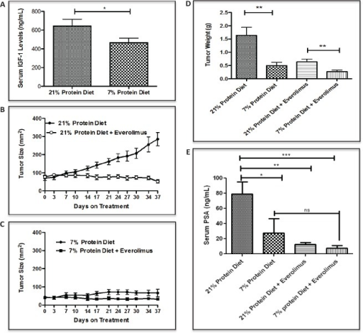 Low protein diet decreases IGF-1 serum levels and inhibit LuCaP23.1-CR growth in combination with everolimus(A) Measurements of serum IGF-1 in LuCaP23.1-CR bearing animals fed with either 21% or 7% protein diet. (B, C) Mice were acclimatized for four weeks to either 21% or 7% protein diet and after LuCaP23.1-CR xenograft implantation were treated with everolimus (2 mg/kg PO, daily X5 times/week). (D, E) Endpoint PSA and tumor weights were collected. Results are expressed as the mean +/− SE, n=10.