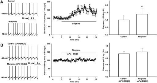 Effect of morphine on spontaneous firing of VTA-DA neurons in rats and the influence of the NMDA receptor antagonist APV and the AMPA receptor antagonist DNQX on the effect of morphine on spontaneous firing of VTA-DA neurons in rats.(A) Effect of morphine on spontaneous firing of VTA-DA neurons. Left panel: representative spontaneous firing traces before and after morphine (10 μM). Middle panel: time course of spontaneous firing before and after morphine (10 μM) (n = 6 cells from five rats). Right panel: average frequency of spontaneous firing before and after morphine (n = 6 cells from five rats, p < 0.05, compared to control before morphine). (B) Influence of the NMDA receptor antagonist APV and the AMPA receptor antagonist DNQX on the effect of morphine on spontaneous firing in VTA-DA neurons. Left panel: representative spontaneous firing traces before and after morphine (10 μM) in the presence of APV (50 μM) and DNQX (10 μM). Middle panel: time course of spontaneous firing before and after morphine in the presence of APV (50 μM) and DNQX (10 μM) (n = 6 cells from five rats). Right panel: average frequency of spontaneous firing before and after morphine in the presence of APV (50 μM) and DNQX (10 μM) (n = 6 cells from five rats, p = 0.34). Data are shown as the mean ±s.e.m. *p < 0.05.DOI:http://dx.doi.org/10.7554/eLife.09275.004