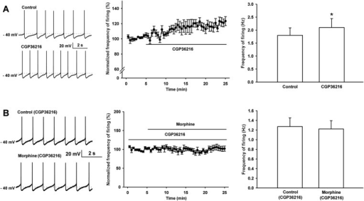 Effect of the selective presynaptic GABAB receptor antagonist CGP36216 on spontaneous firing and the influence of the selective presynaptic GABAB receptor antagonist CGP36216 on the effect of morphine on spontaneous firing of VTA-DA neurons in rats.(A) Effect of the selective presynaptic GABAB receptor antagonist CGP36216 on spontaneous firing in VTA-DA neurons. Left panel: representative spontaneous firing traces before and after CGP36216 (100 μM). Middle panel: time course of spontaneous firing before and after CGP36216 (100 μM) (n = 6 cells from four rats). Right panel: average frequency of spontaneous firing before and after CGP36216 (100 μM) (n = 6 cells from four rats, p < 0.05, compared to control before CGP36216). (B) Influence of the selective presynaptic GABAB receptor antagonist CGP36216 on the effect of morphine on spontaneous firing in VTA-DA neurons. Left panel: representative spontaneous firing traces before and after morphine (10 μM) in the presence of CGP36216 (100 μM). Middle panel: time course of spontaneous firing before and after morphine (10 μM) in the presence of CGP36216 (100 μM) (n = 6 cells from four rats). Right panel: average frequency of spontaneous firing before and after morphine (10 μM) in the presence of CGP36216 (100 μM) (n = 6 cells from four rats, p = 0.35, compared to CGP36216 before morphine). Data are shown as the mean ±s.e.m. *p < 0.05.DOI:http://dx.doi.org/10.7554/eLife.09275.012