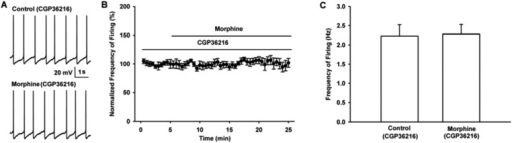 Influence of selective presynaptic GABAB receptor antagonist CGP36216 on the effect of morphine on the firing in VTA-DA neurons of mice.(A) Representative spontaneous firing traces recorded before and after morphine (10 μM) in the presence of CGP36216 (100 μM). (B) Time course of spontaneous firing before and after morphine in the presence of CGP36216 (100 μM) (n = 6). (C) Average frequency of spontaneous firing before and after morphine (10 μM) in the presence of CGP36216 (100 μM) (n = 6, P > 0.05, compared to CGP36216 before morphine).DOI:http://dx.doi.org/10.7554/eLife.09275.019