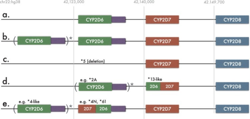 Five known CYP2D6 gene arrangements. The reference strand of human genome was used in all cases. Various number, including zero, of CYP2D6 copies is allowed within the parenthesis. (a) CYP2D6 non-duplicated arrangement consisting one copy of each of CYP2D6, CYP2D7 and CYP2D8. Purple rectangle represents CYP2D6 untranslated region. This region contains several variations important for the detection of some CYP2D6 alleles; (b) typical CYP2D6 duplication arrangement; (c) the deletion arrangement, indicating the absence of CYP2D6 (denoted as *5 allele); (d) CYP2D6/2D7 fusions (*13 family of alleles) lacking CYP2D7. Variable number of copies of CYP2D6 gene might precede fusion alleles; (e) CYP2D7/2D6 fusion cases with presence of CYP2D7. Variable number of copies of CYP2D6 gene might precede fusion alleles in this case as well
