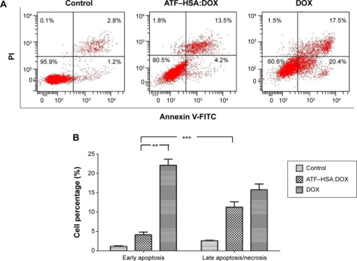 Flow cytometric distribution of H1299 cells after treatment with and without DOX (10 μM) or ATF–HSA:DOX (10 μM) for 12 hours.Notes: (A) The cells were stained by FITC-labeled Annexin V and PI. (B) Quantifications of the cell population show that ATF–HSA:DOX is less toxic than DOX. ATF–HSA:DOX given for 12 hours produced significantly fewer early apoptotic cells than did DOX and ~three times fewer early apoptotic cells than late apoptotic cells, suggesting that ATF–HSA:DOX-induced cell death is likely due to a different mechanism from DOX. **P<0.01. ***P<0.001.Abbreviations: ATF, amino-terminal fragment of urokinase; DOX, doxorubicin; FITC, fluorescein isothiocyanate; HSA, human serum albumin; PI, propidium iodide.