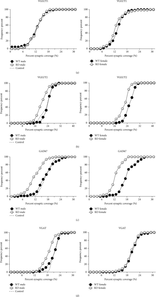 Cumulative frequency plots of percent coverage by structures immunoreactive to different synapse-associated proteins onto the soma and proximal-most dendrites of labeled motoneurons in tamoxifen treated and untreated SLICK::trkBf/f male (left) and tamoxifen treated female (right) mice. WT (black symbols) refers to wildtype motoneurons in tamoxifen treated mice, without YFP, that still retain trkB receptors. KO (white symbols) refers to knockout motoneurons labeled with YFP that do not have trkB receptors. Control (dashed line) refers to data from male SLICK::trkBf/f mice not treated with tamoxifen. Data from all the mice in each group were pooled. (a) VGLUT1. (b) VGLUT2. (c) GAD67. (d) VGAT.