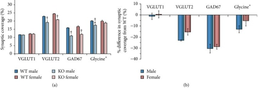 (a) The mean percent coverage (±SEM) by contacts immunoreactive to VGLUT1, VGLUT2, GAD67, or glycine in male and female tamoxifen treated SLICK::trkBf/f mice. These values were determined for each synapse-associated protein by averaging data from individual mice in the different groups. The significance of differences between groups was then evaluated with ANOVA. The estimated percent coverage by contacts containing glycine equals the percent coverage by VGAT+ contacts minus percent coverage by GAD67. WT refers to wildtype motoneurons without YFP that still retain trkB receptors. KO refers to knockout motoneurons labeled with YFP that do not have trkB receptors. †p < 0.05 versus WT and ∗p < 0.05 versus female. (b) The same data are expressed as mean (±95% confidence limits) percent differences between WT cells and KO cells.