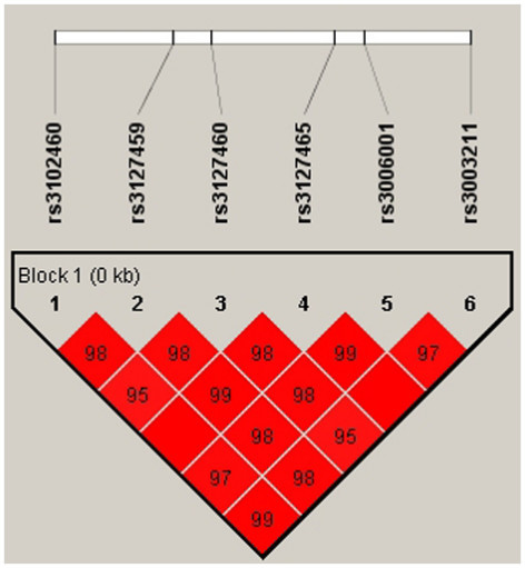 Graphical representation of LD patterns of the six SNPs in the total sample. The graphic represents the pairwise calculation of r2 for each pair of SNPs at each gene. Squares represent r2 values. Values within boxes are the measures of r2 between pairs of markers in a scale from 0 to 100. If there is no value, r2 = 1.